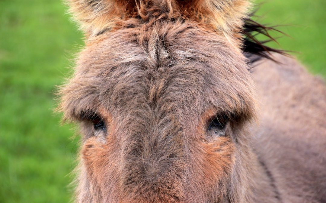 How a donkey taught me a profound life lesson